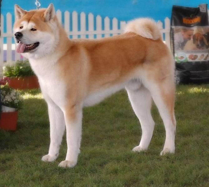10 китайских пород собак