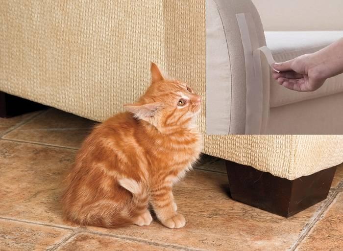 Как отучить кошку драть обои и мебель? лайфхаки от эксперта: новости, животные, кошка, кошки, мебель, дрессировка, поведение, домашние животные