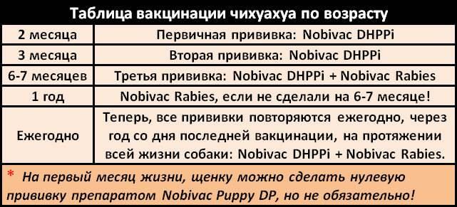 Зачем глистогонить собаку перед прививкой