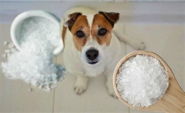 Нужна ли собакам соль: чем грозит избыток соли, почему соль добавляют в корма