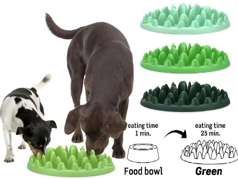 8 полезных гаджетов для домашних животных - лайфхакер