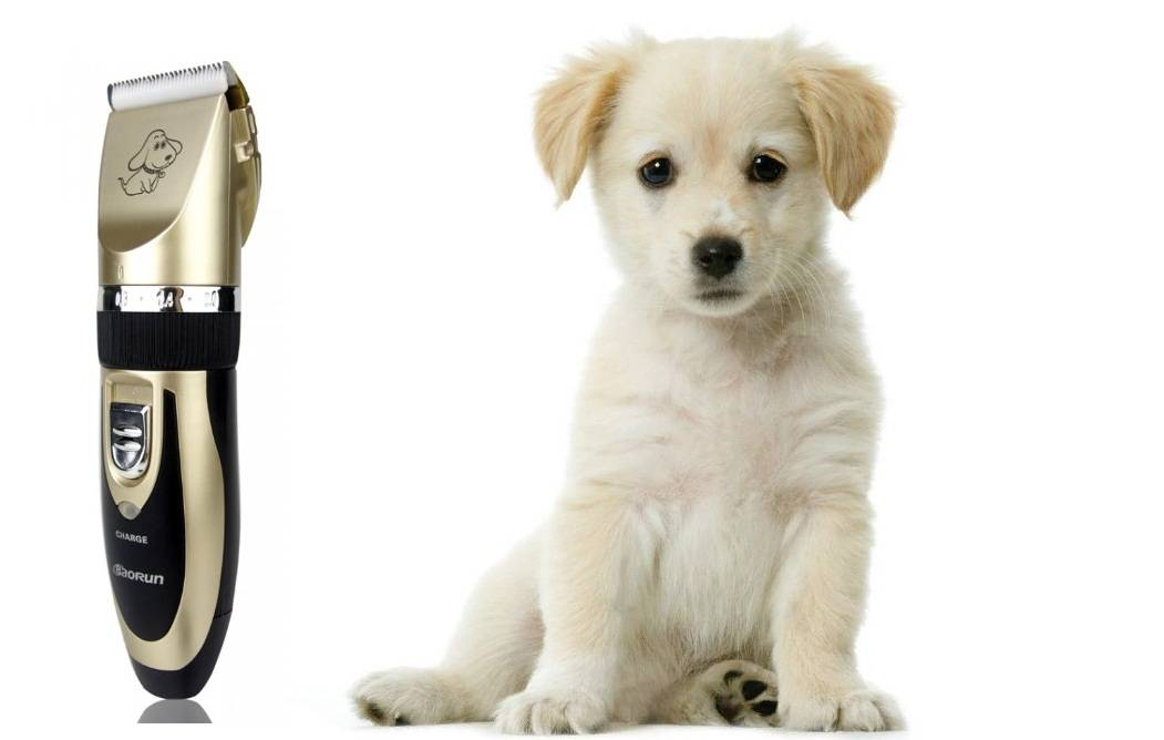 Топ-10 лучших машинок для стрижки собак – рейтинг 2020 года