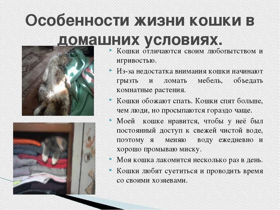 Бизнес на разведении кошек в домашних условиях: популярные породы, помещение, оборудование, приобретение котят, вязка