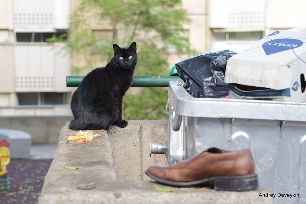 Самый толстый кот в мире: книга рекордов гиннесса