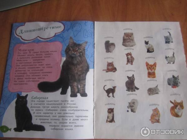 Как воспитывать котенка, кошку и кота ласковыми и спокойными