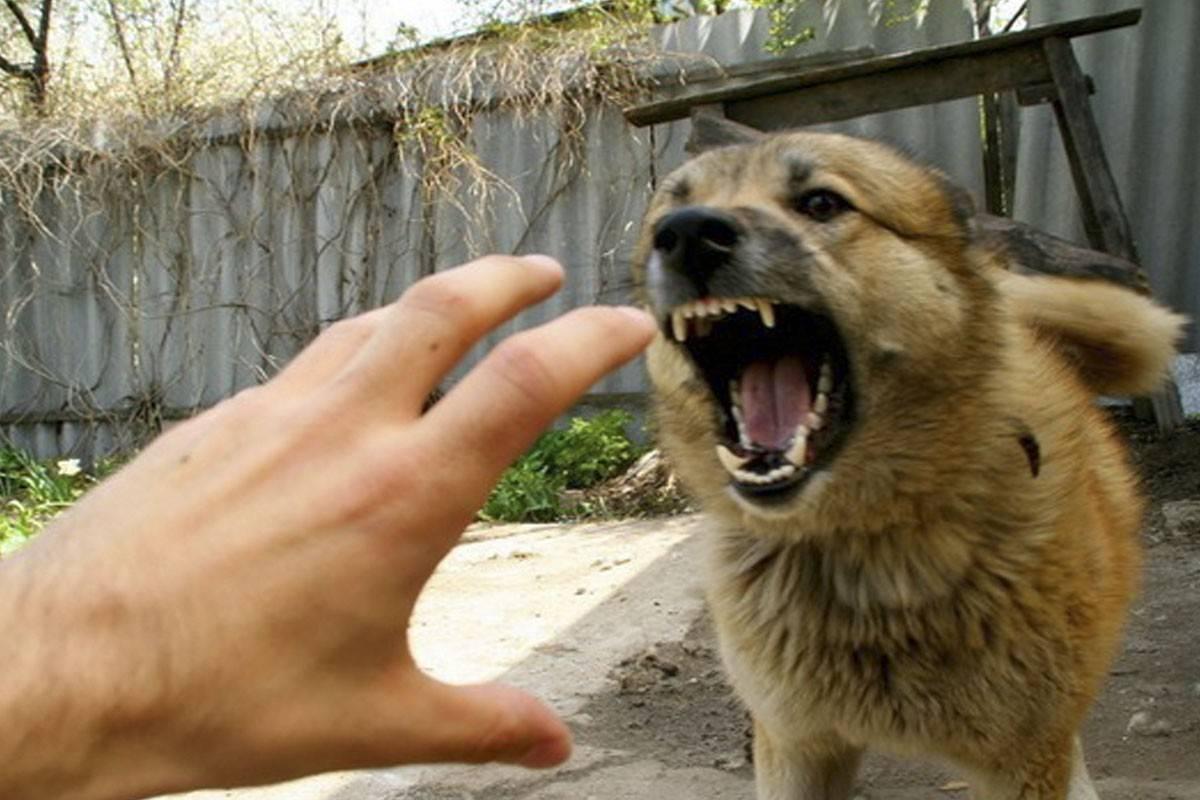 Если укусила домашняя собака до крови что делать | симптомы и признаки, первая помошь, лечение от бешенства, штрафы в беларуси