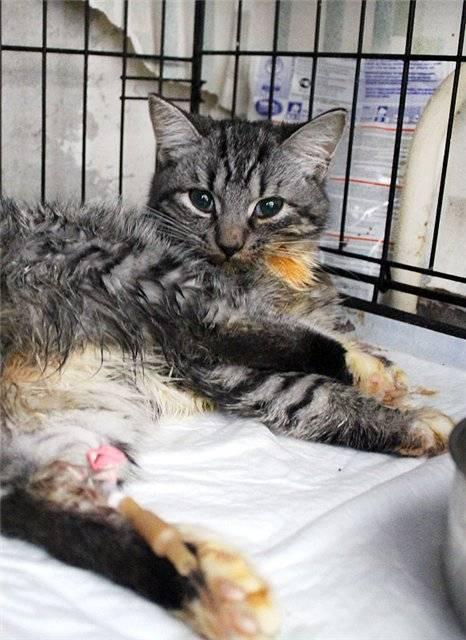 Панлейкопения (кошачья чумка) - высокозаразная инфекция...