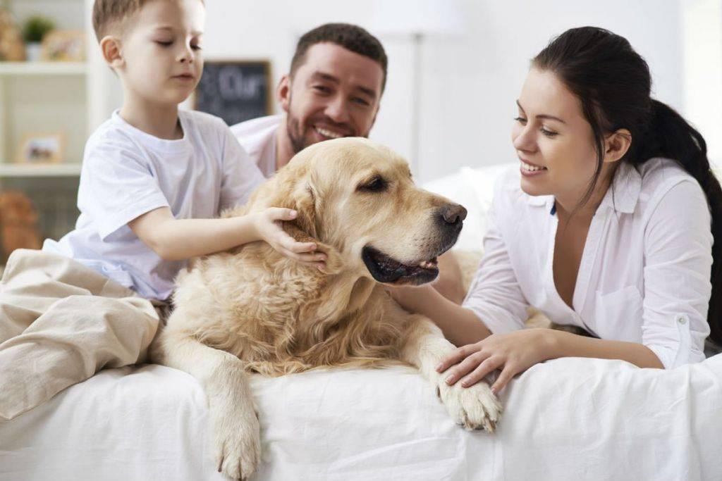 Сколько живут собаки и как продлить их жизнь - лайфхакер