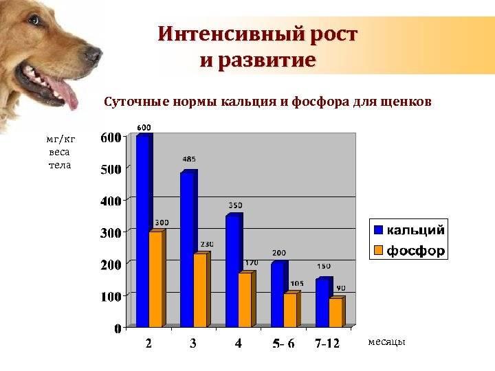 Сколько лет живут лабрадоры