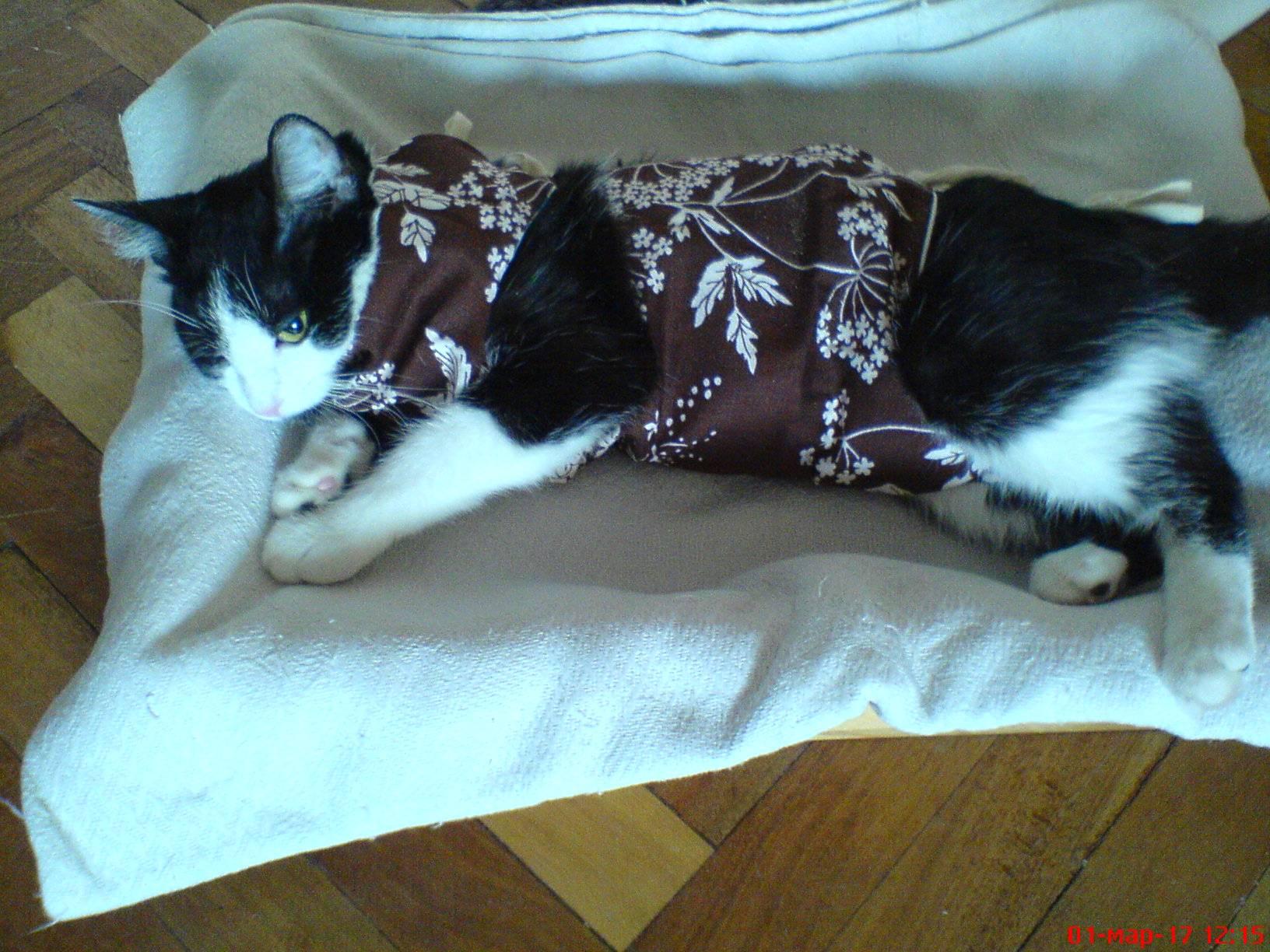 Сколько кот отходит от наркоза после кастрации | как долго