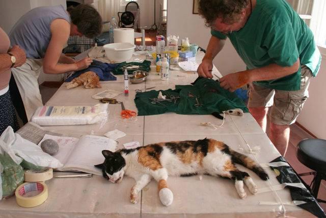 Лечение кошек в домашних условиях