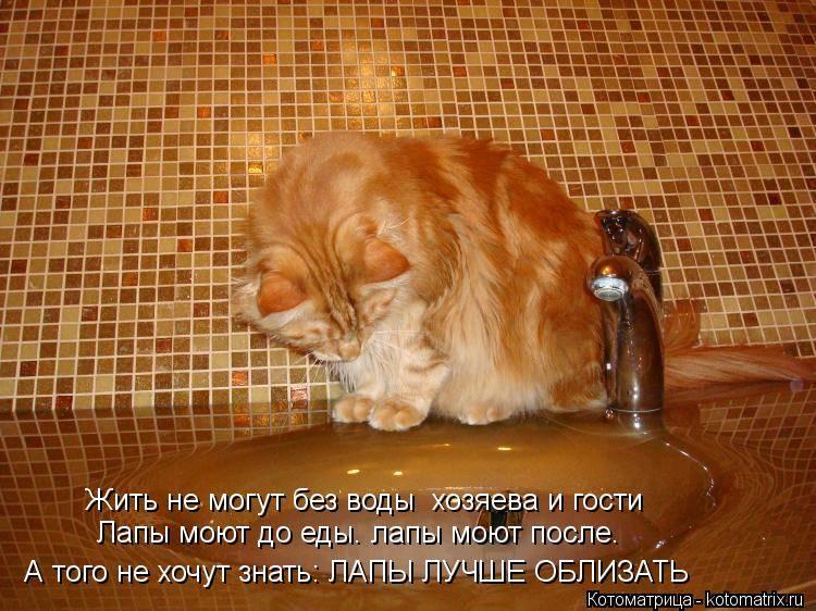 Почему котенок не пьет воду и что делать?