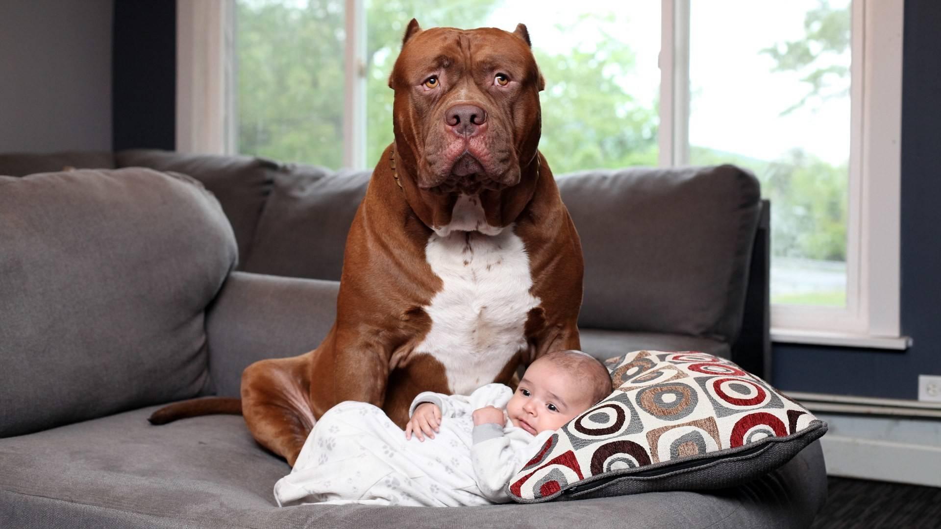 Топ-10 самых спокойных и уравновешенных собак