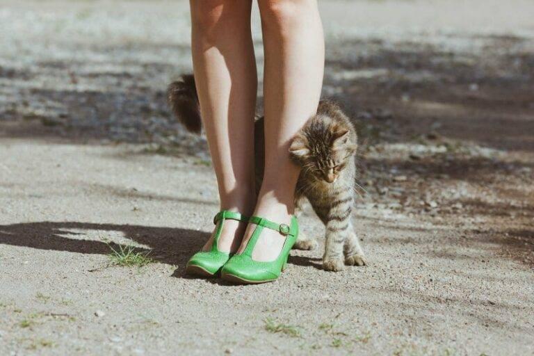 Как сохранить хорошие отношения с котом