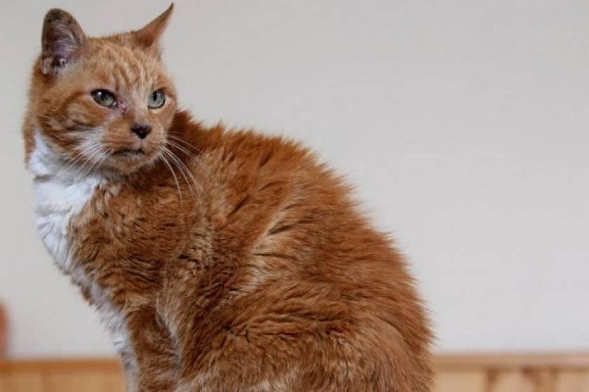 Сколько живут кошки и кот, средняя продолжительность жизни в домашних условиях, таблица по породам
