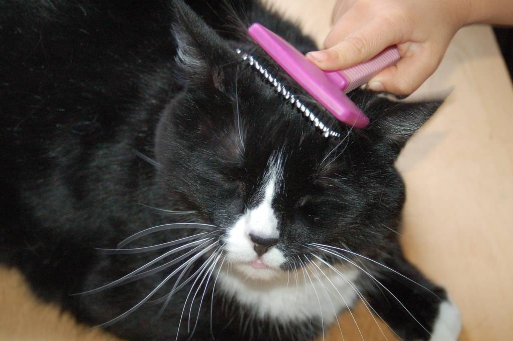 Колтунорез: помощник в уходе за кошкой