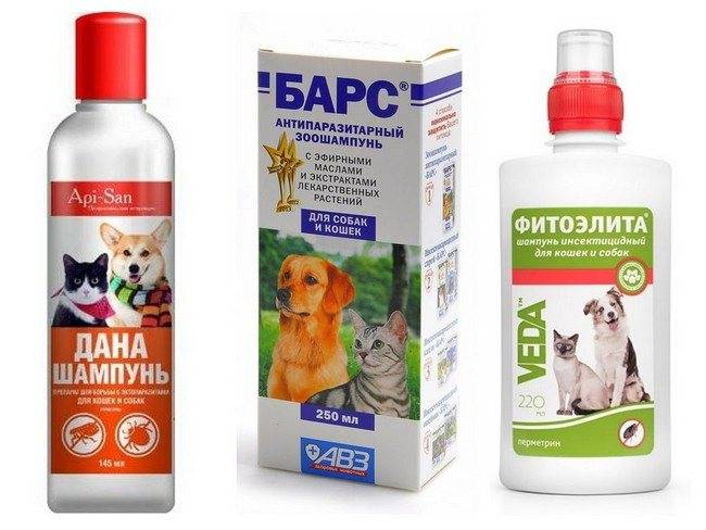 Шампунь от блох и клещей для кошек: отзывы, какой лучше, использование дегтярного мыла