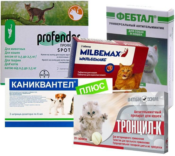 Дегельминтизация кошек и котят - как часто глистогонить, чем, в домашних условиях, лучшие препараты