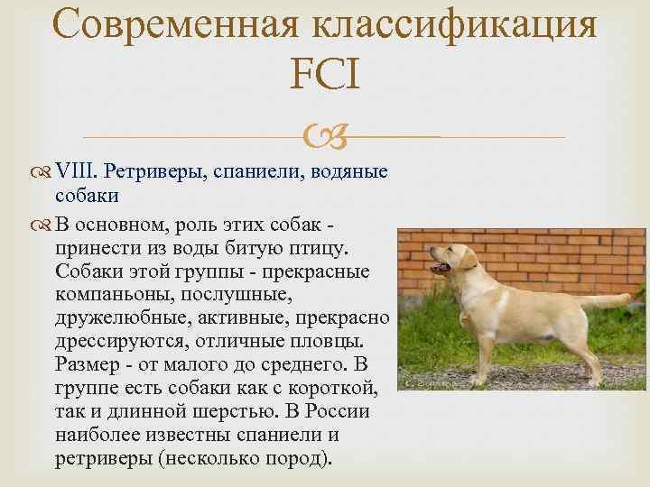 Классификация собак по использованию. породы собак по применению