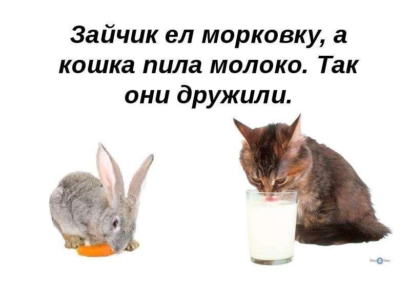 Кошка не пьет воду что делать? 11 наиболее вероятных причин