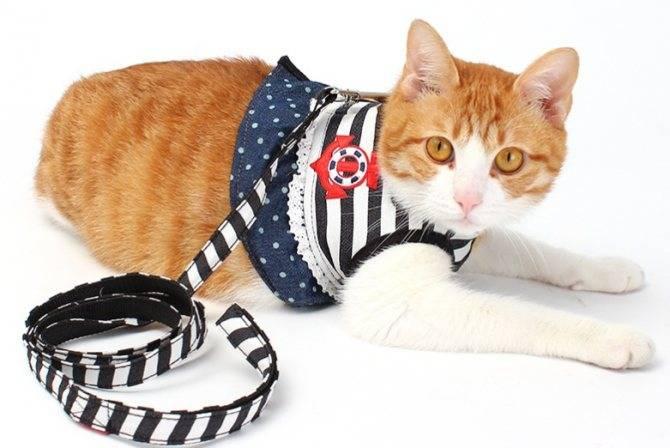 Поводки и шлейки для прогулки с котом или кошкой: особенности выбора, как надеть приспособление на питомца, пошаговая фото инструкция, видео
