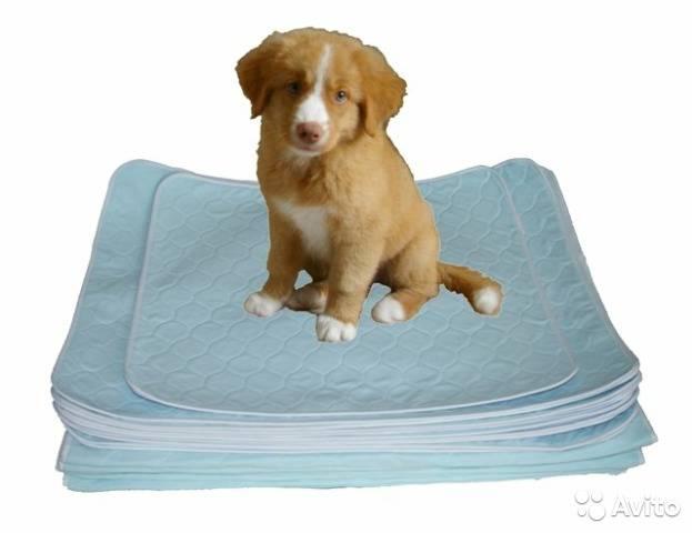 Пеленки для щенков: виды и критерии выбора