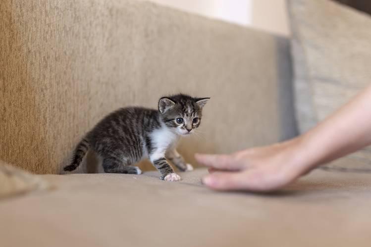 Как приручить дикого котенка?