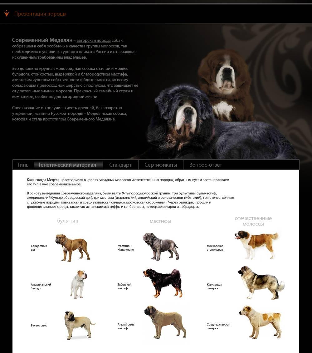 Тибетский спаниель собака. описание, особенности, уход и цена породы | sobakagav.ru