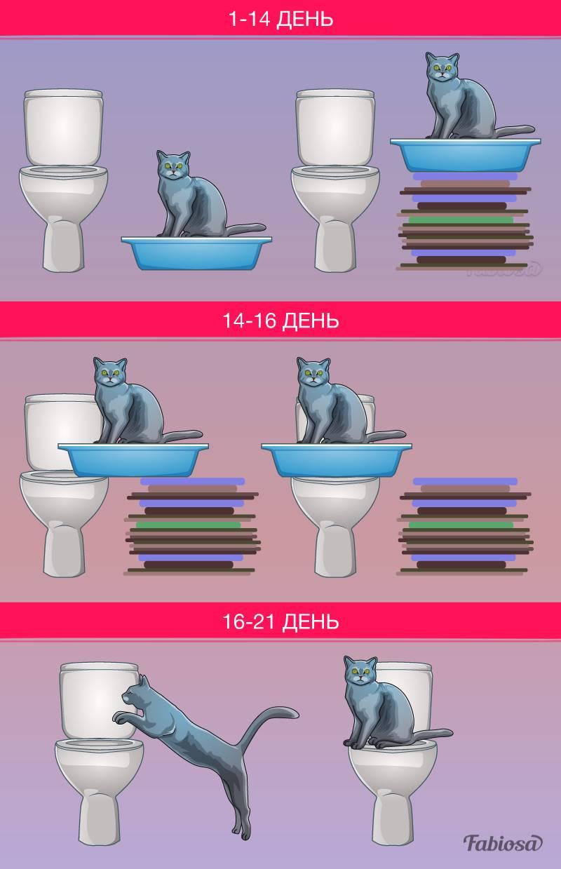 Как приучить кота к унитазу в 5 этапов [инструкция]