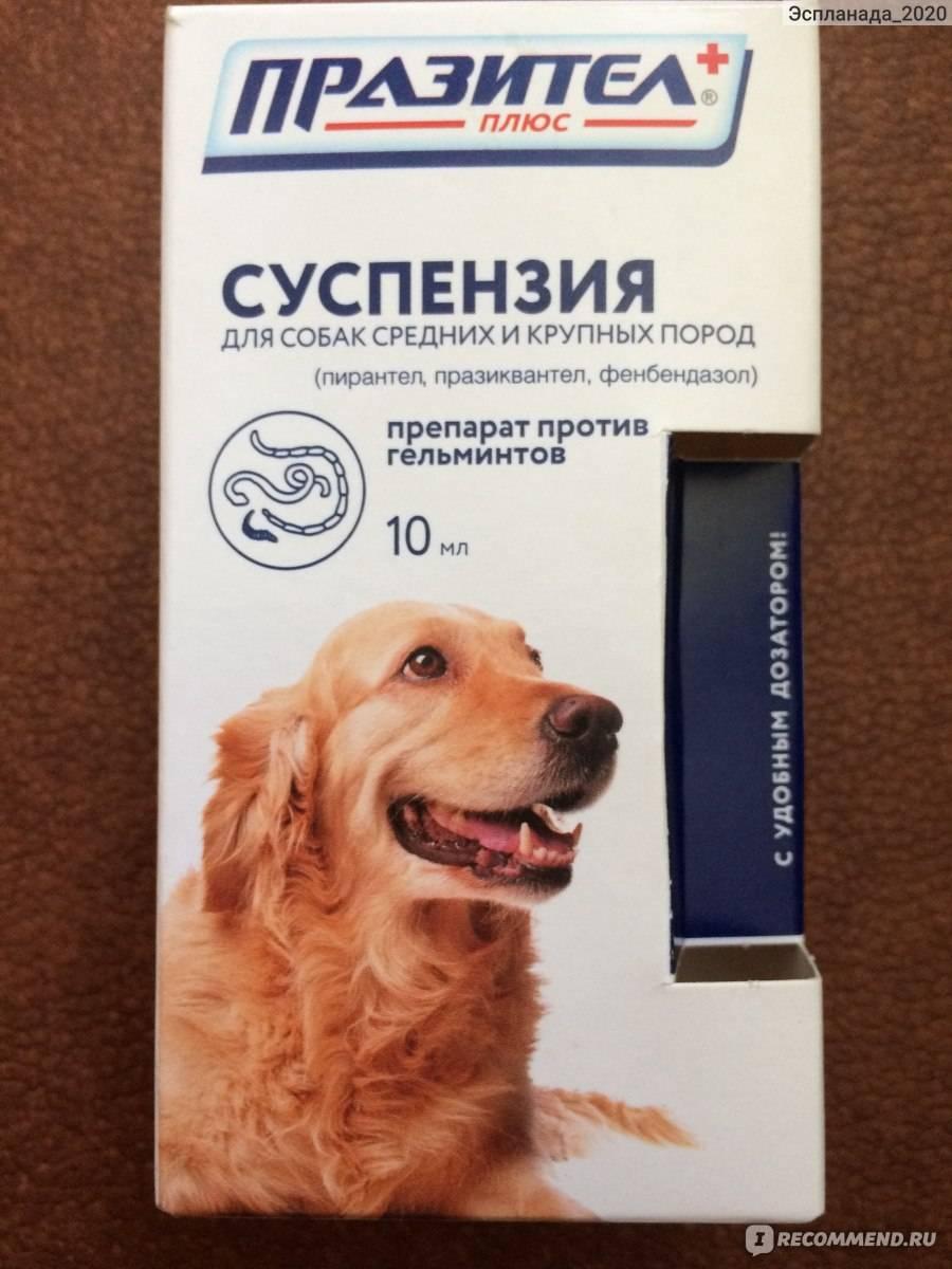 Празител для собак: инструкция и показания к применению, отзывы, цена