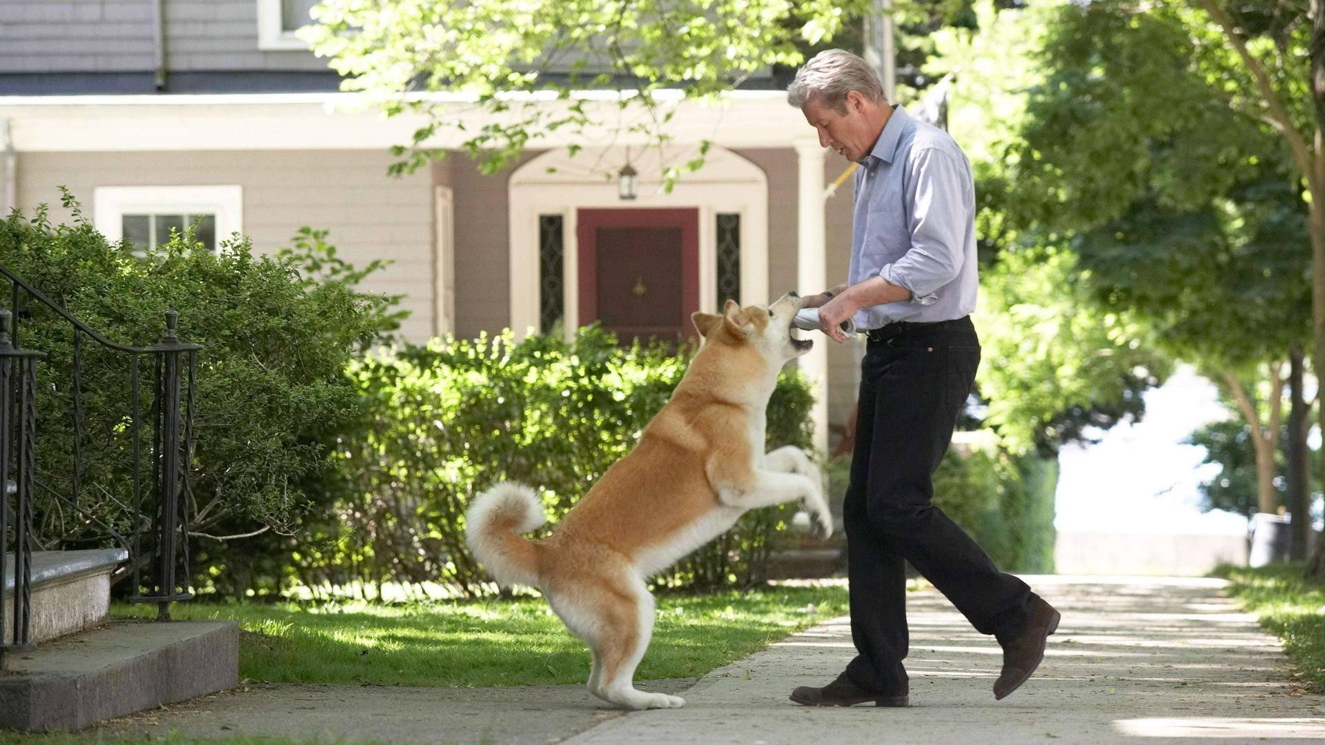 Почему собака лучший друг человека: основные причины