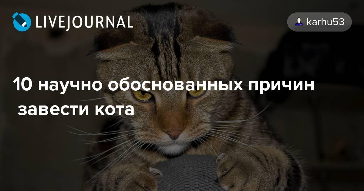 10 научно обоснованных причин завести кота - полонсил.ру - социальная сеть здоровья - медиаплатформа миртесен