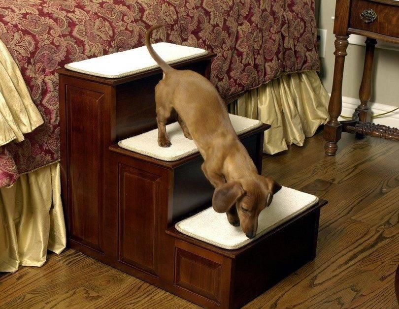 Лесенка для собак мелких пород: какую выбрать, купить