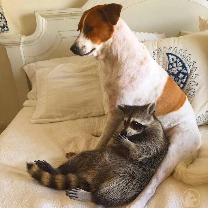 Какие собаки уживаются и дружат с кошками