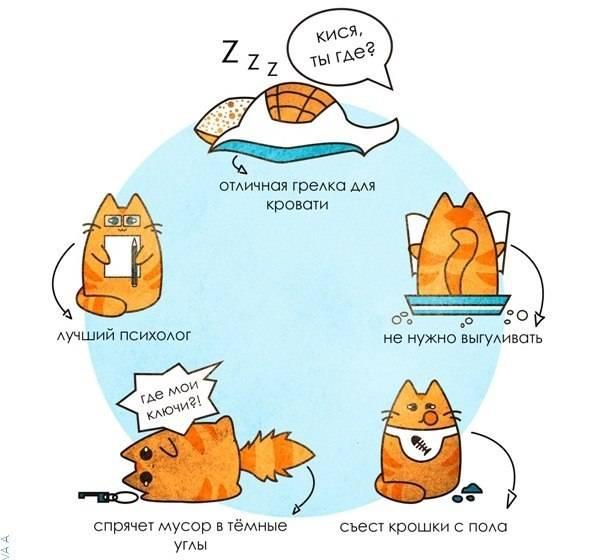 10 причин завести в своем доме кота