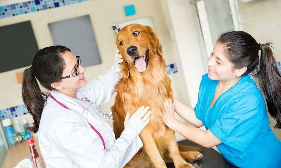 Круглосуточная ветеринарная клиника vet.city