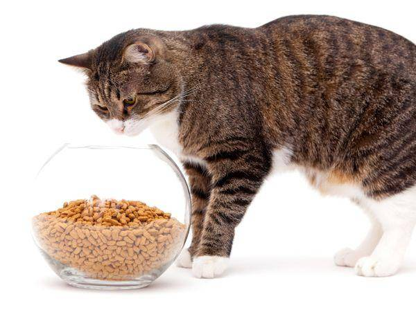 Сахарный диабет у собак и кошек