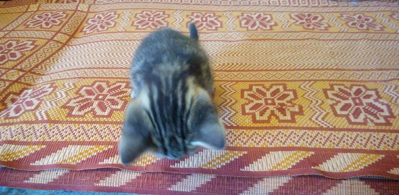Кошка ездит попой по полу после туалета