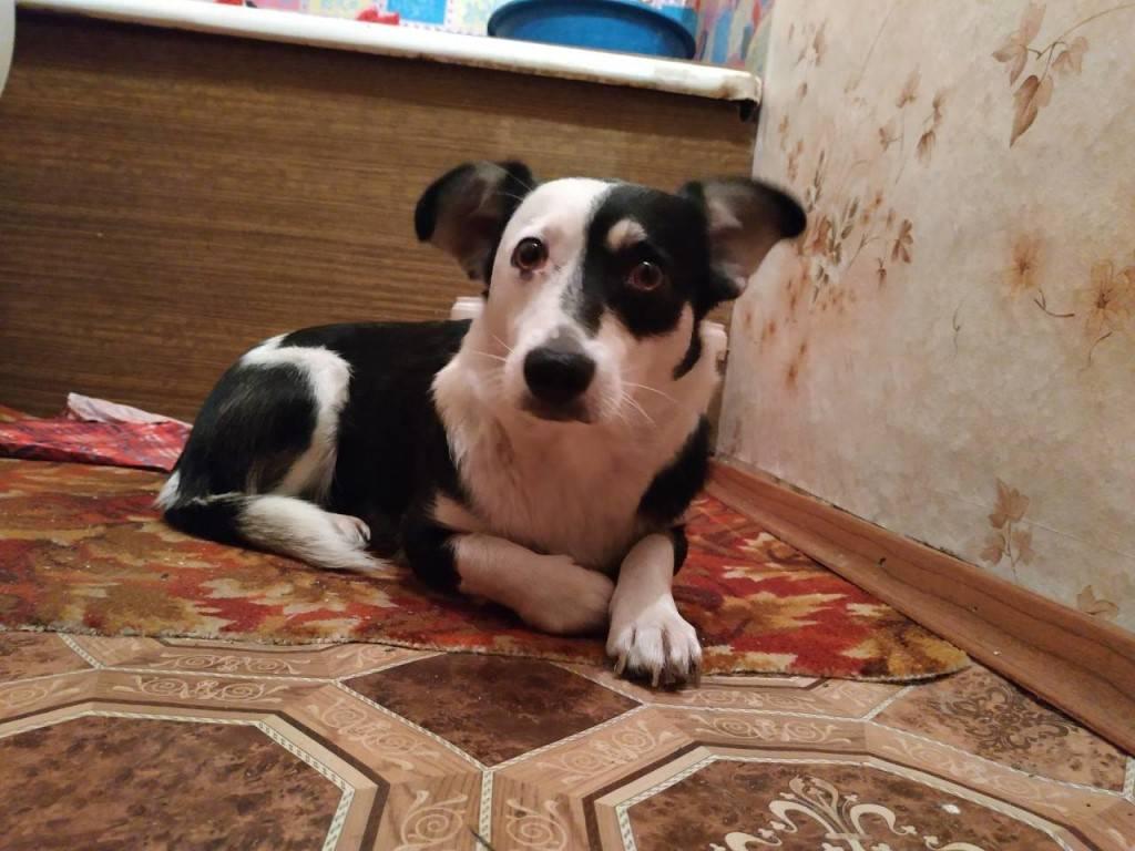 Собаки компаньоны: породы | для квартиры, ребенка, разных размеров