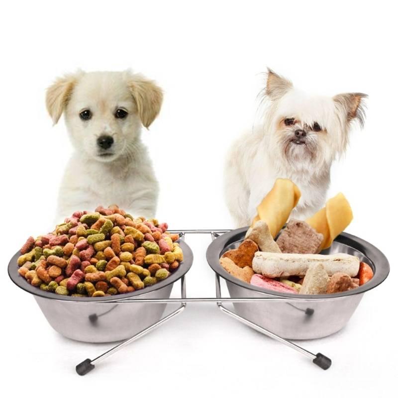 Какой корм лучше, сухой или влажный?