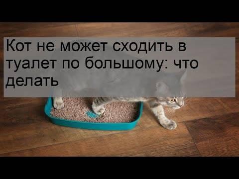 Запор у кошки: причины, лечение, профилактика
