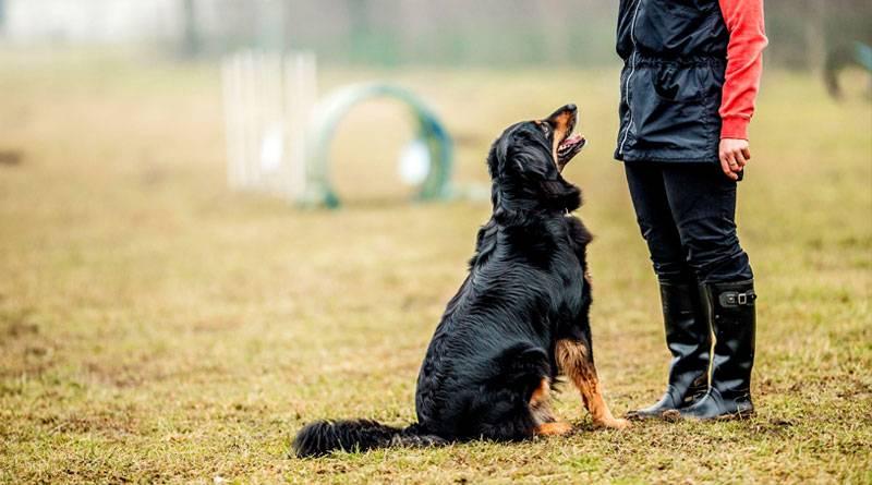 Дрессировка собаки: самому или с тренером?