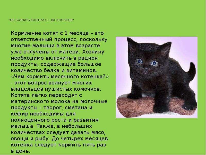 Чем лучше всего кормить котенка в 1 месяц без кошки. как выкормить маленького котенка, если нет кормящей кошки: смеси, прикорм - автор екатерина данилова - журнал женское мнение
