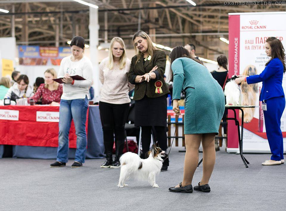 """Zooпортал.pro :: international dog show cacib – fci / интернациональная выставка собак cacib – fci г. иркутск """"байкал-лето-2021"""""""