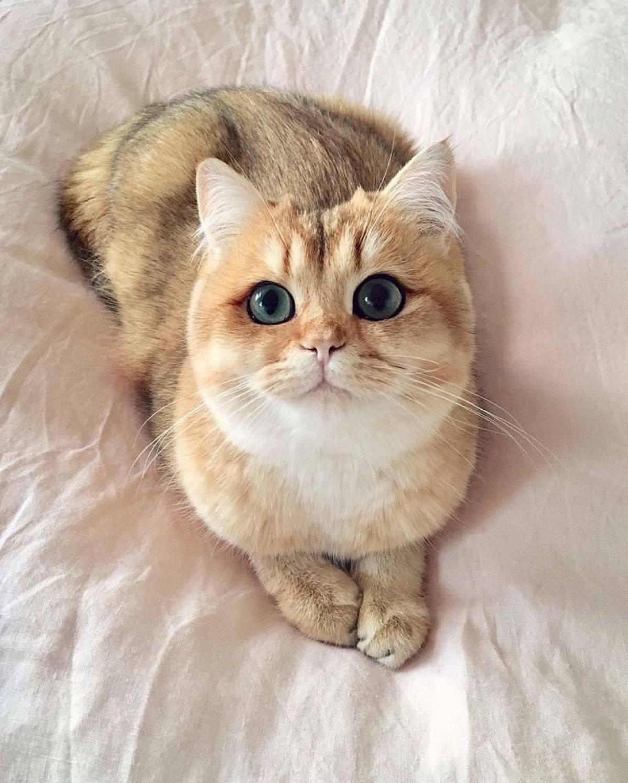 Новая порода кошек — снупи, милые коты с большими глазами, белый кот коби, как называется котёнок с огромными глазами