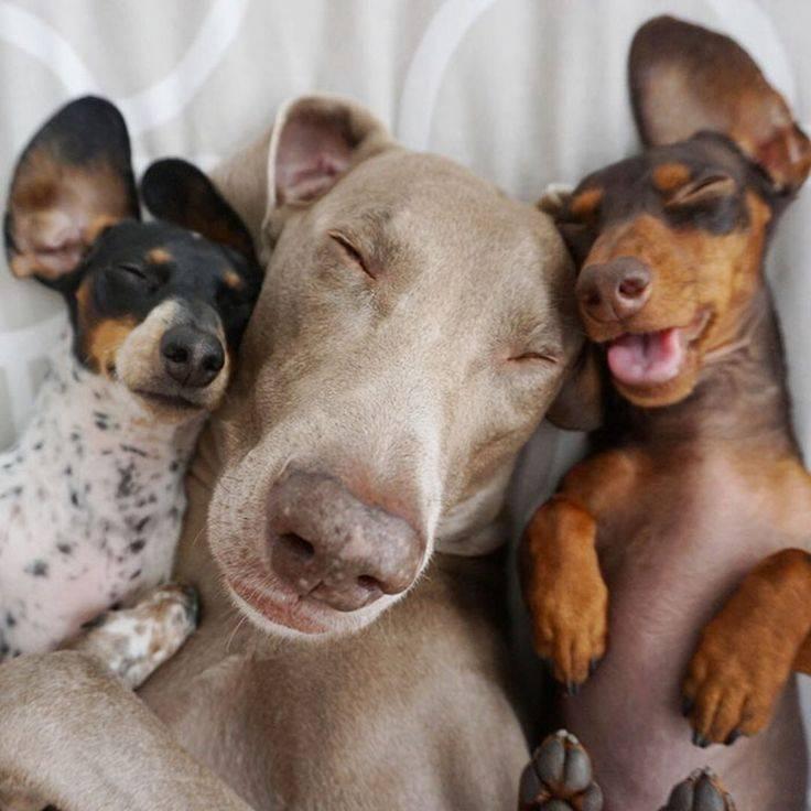 У какой породы собак самый лучший нюх