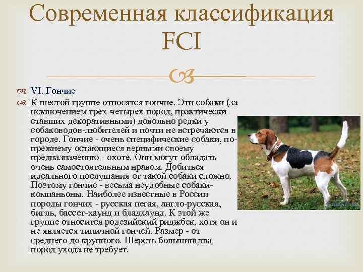 Классификация пород собак: группы в системе fci