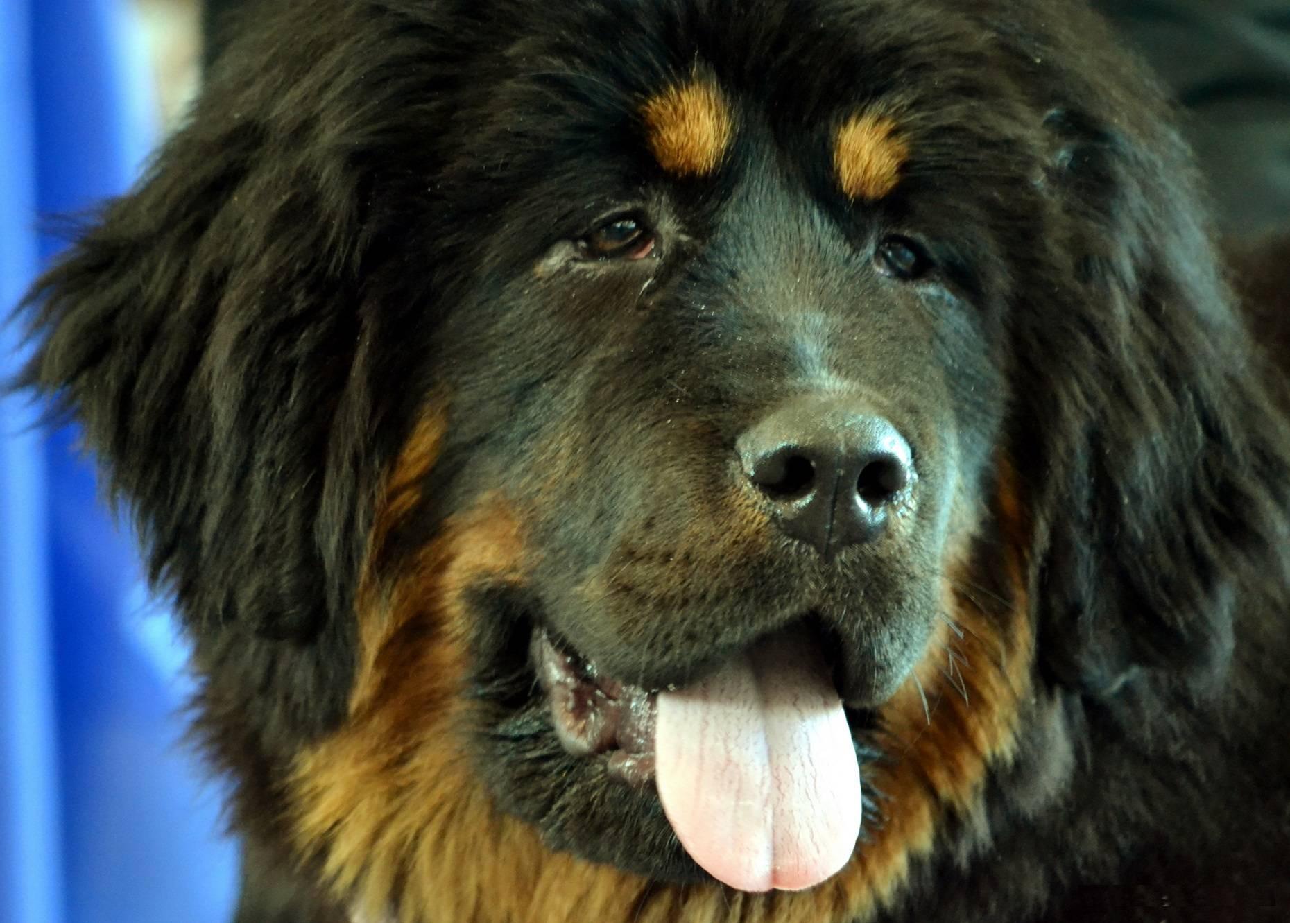 Топ-10 самых добрых пород собак в мире (с фото) | все о собаках