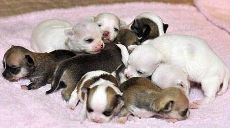Когда щенки открывают глаза? на какой день после рождения открываются глаза?  почему это происходит через время? что делать, если у собак они открываются плохо?