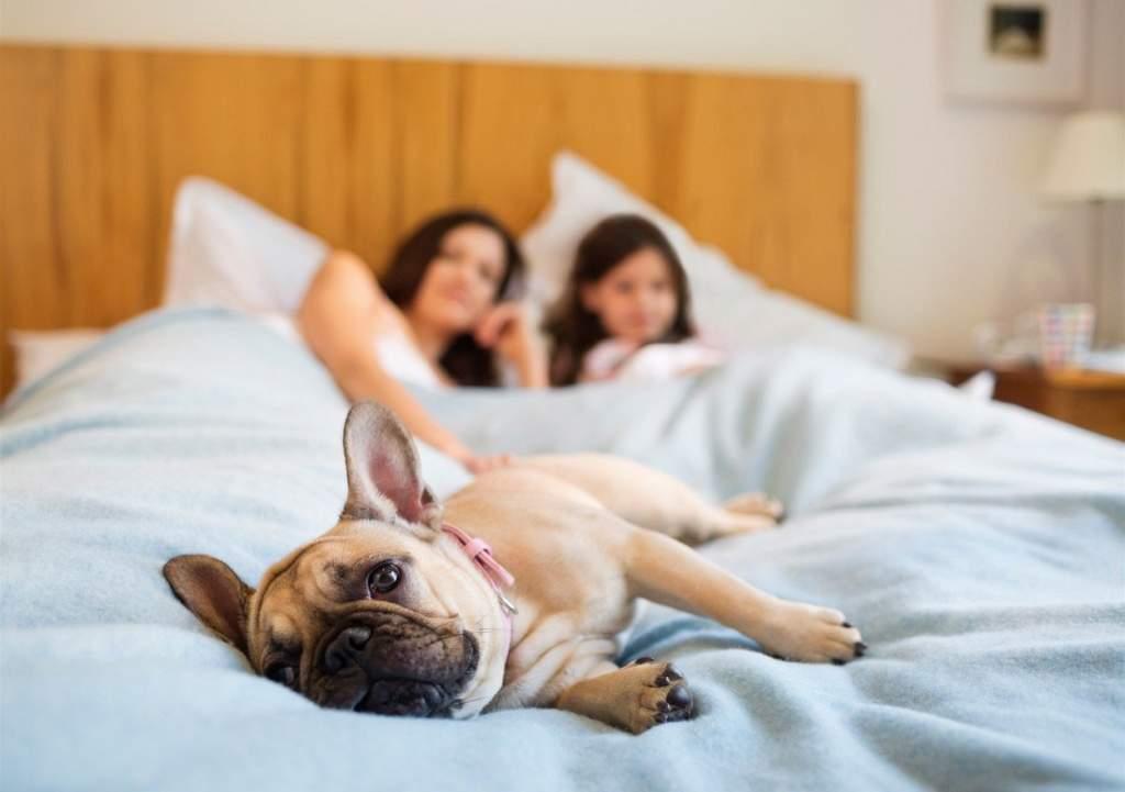 Как отучить собаку спать на кровати с хозяином – 5 простых метода